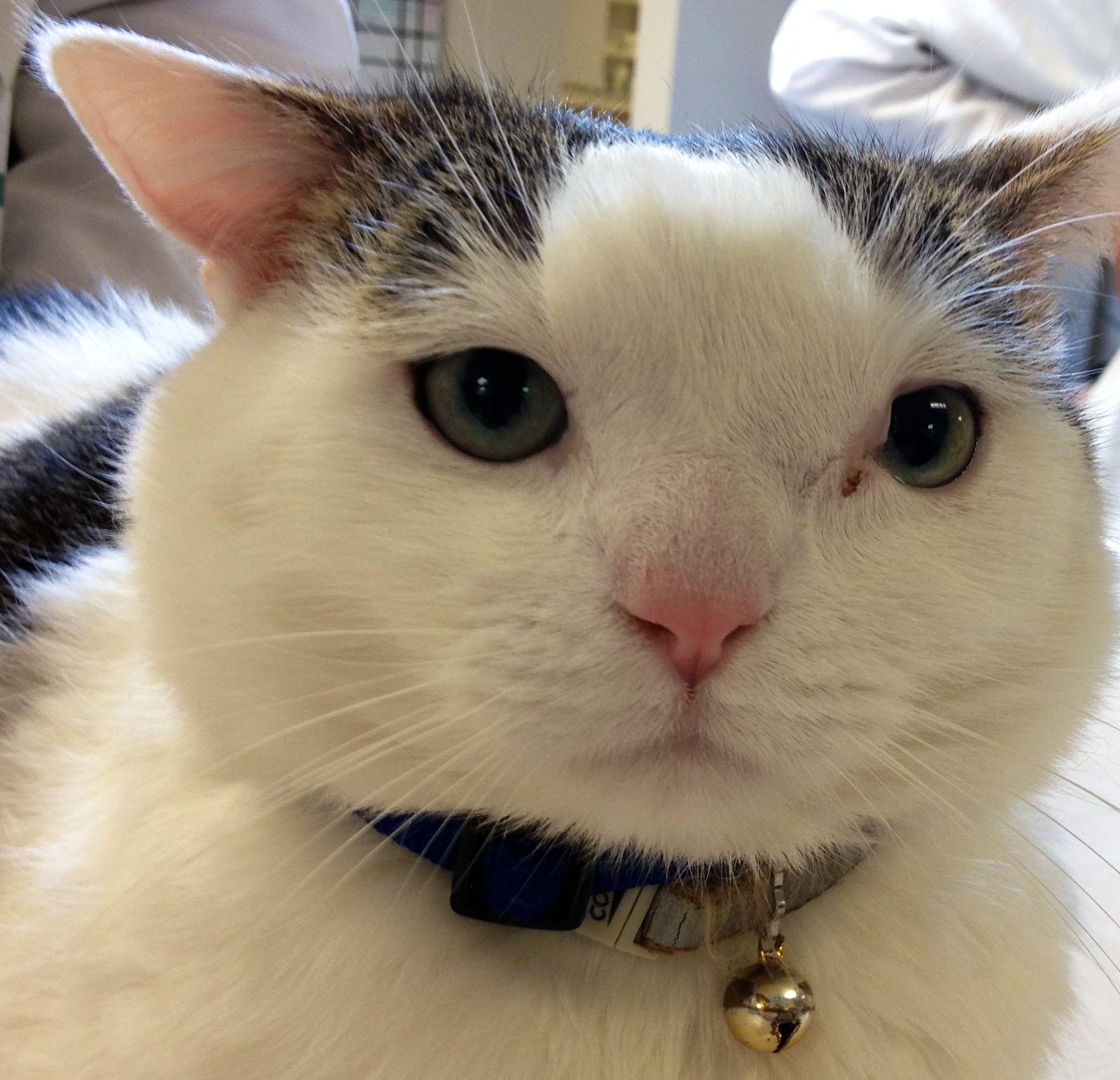 Most cats achieve complete remission while