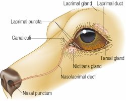 keratoconjunctivitis