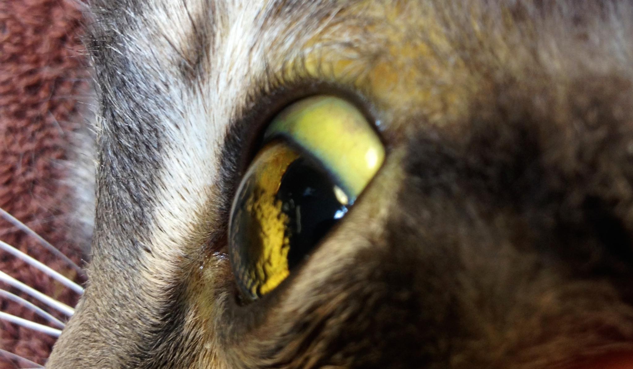 Cat Bile In My Eye