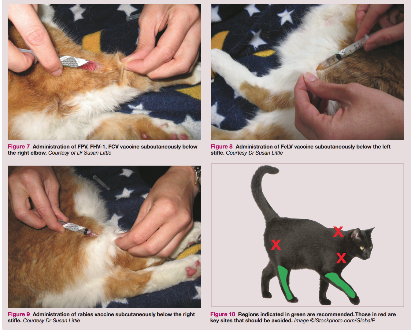 Vaccinations & Felines – Which Ones Do They Really Need?